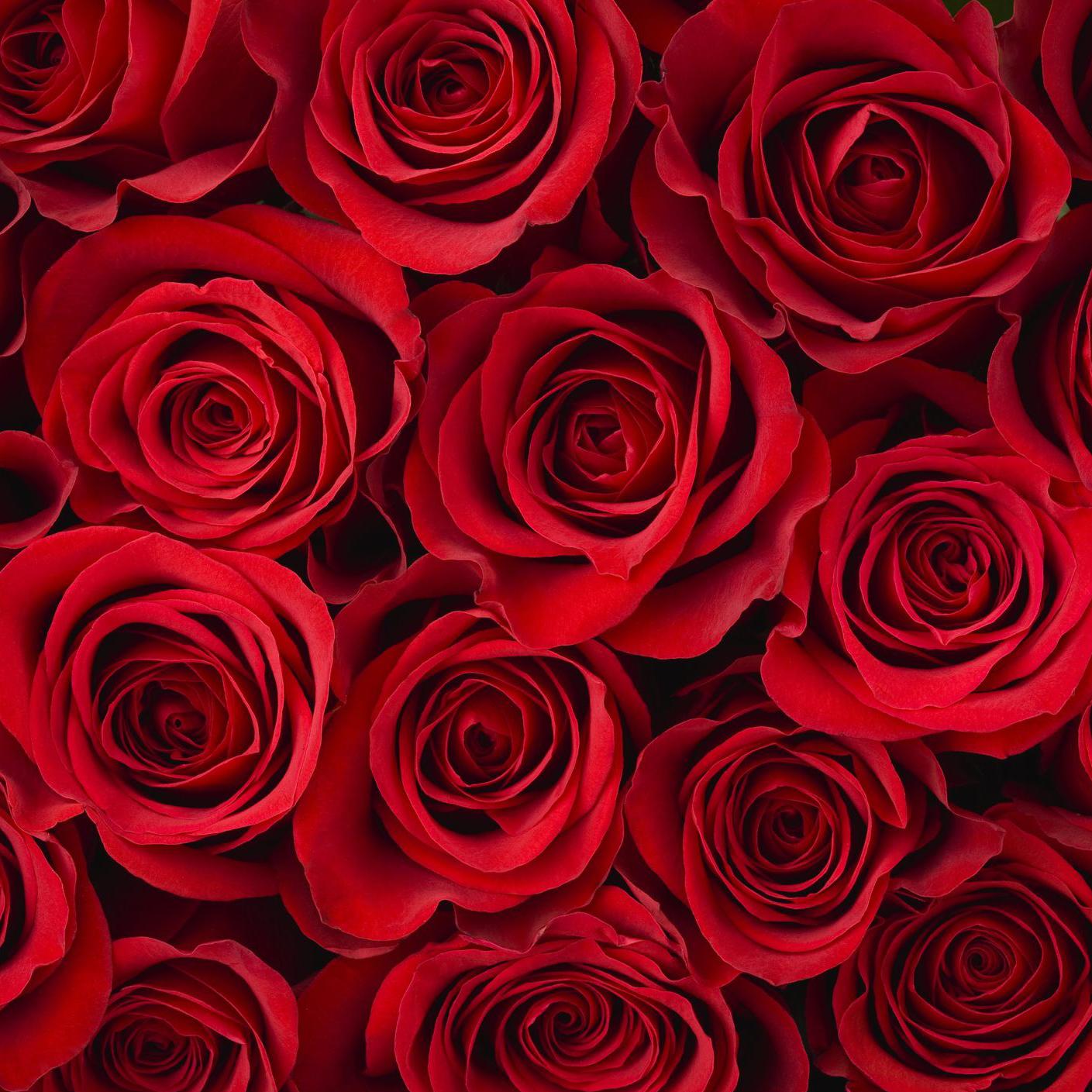 red-roses-183274994-5882289c3df78c2ccd7f1c0e.jpg